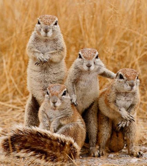 動物達の集合写真の画像(7枚目)