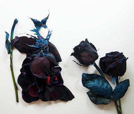 本物の花で描いたアートが華やかで癒される!!の画像(9枚目)
