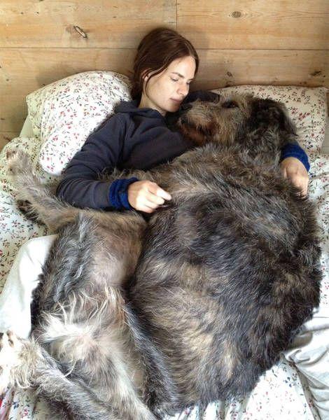 巨大な犬の画像(26枚目)