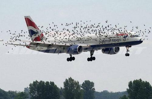 驚きの航空機の画像(3枚目)