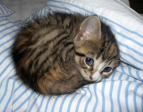 kittens_06