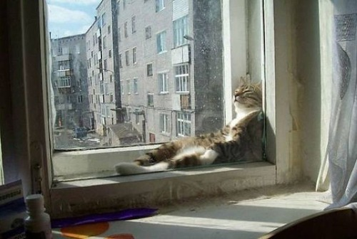 神々しい猫の画像(4枚目)