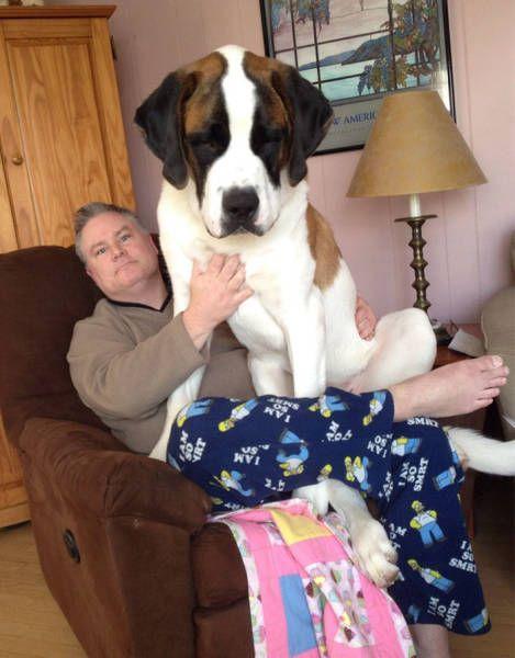 巨大な犬の画像(13枚目)
