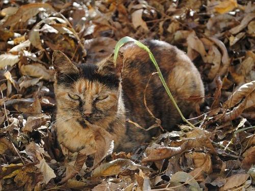 隠れているつもりの猫の画像(7枚目)