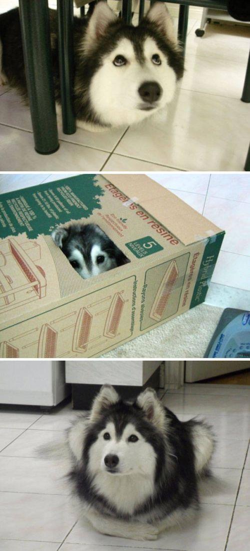 猫と勘違いをしている犬の画像(2枚目)
