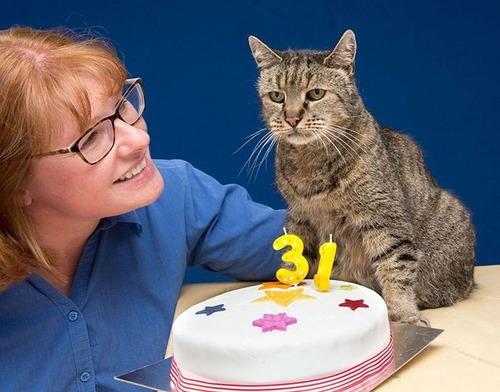 31歳の誕生日を迎えたネコの画像(1枚目)