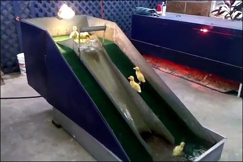 子供のアヒル用の滑り台の画像_000003808