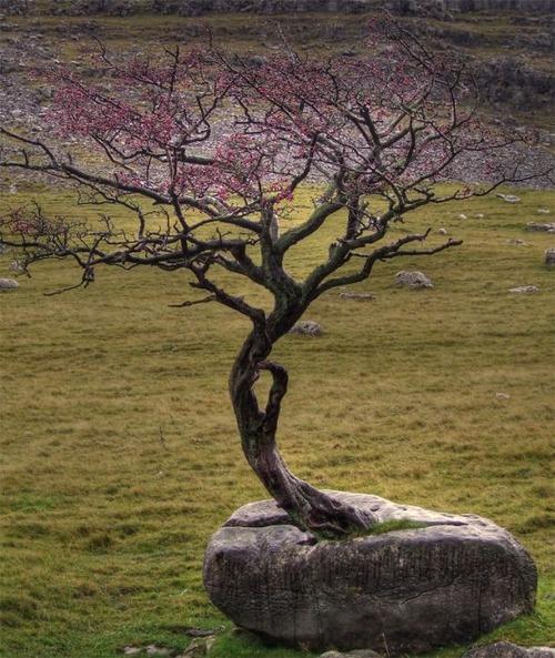 生えている樹木の画像(6枚目)