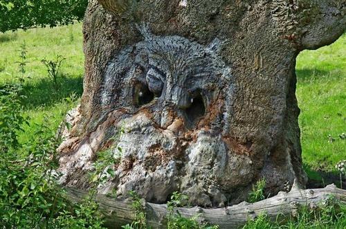 不気味な形の樹木の画像(1枚目)