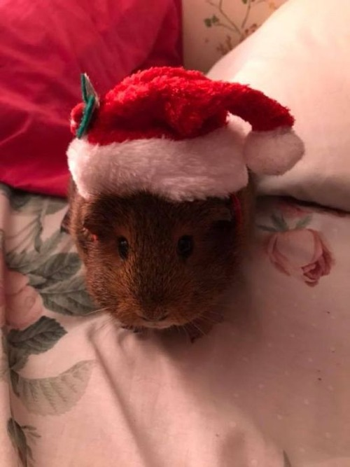 クリスマスのコスプレをした動物達の画像(2枚目)