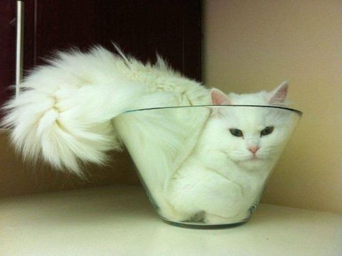 器に入った猫の画像(17枚目)