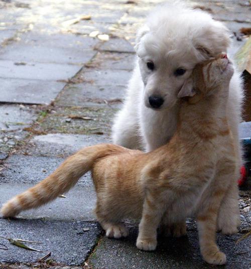 ほのぼのする!仲の良い犬と猫の画像の数々!!の画像(7枚目)