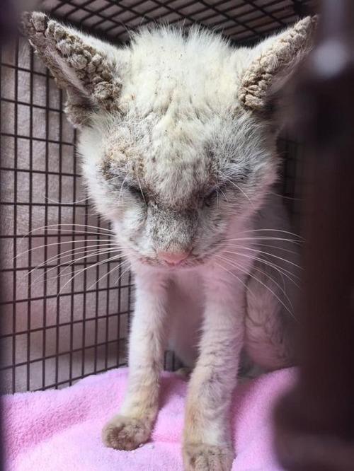 目が開かず見えない猫の画像(2枚目)