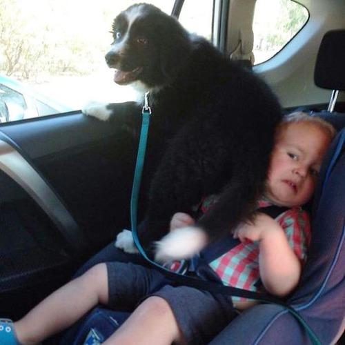 犬は可愛いけど、かなりジャマな感じの犬の画像の数々!!の画像(3枚目)