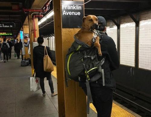 カバンに入れられた犬の画像(12枚目)