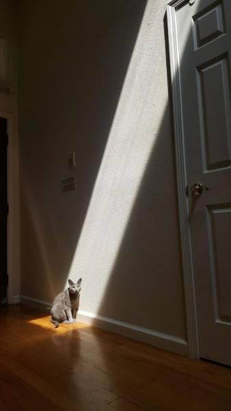 神々しい猫の画像(17枚目)