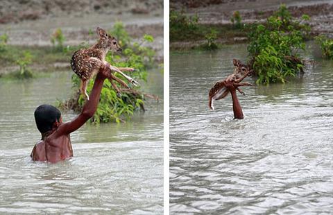 濁流に捲込まれた子鹿の助け方がワイルドすぎる少年!の画像(4枚目)