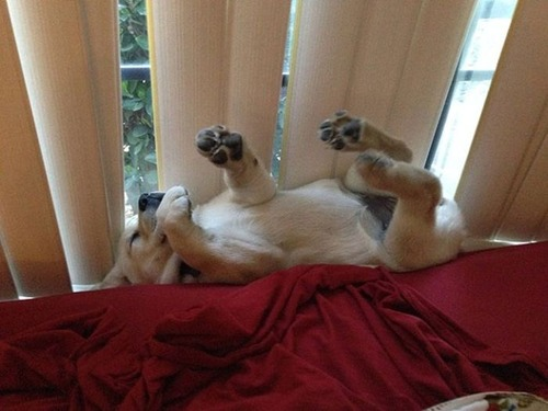子犬が眠っているの画像(10枚目)