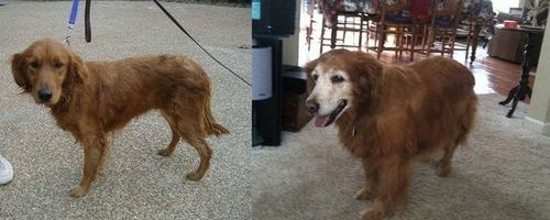 犬や猫の最初に撮った写真と最後に撮った写真の数々の画像(16枚目)