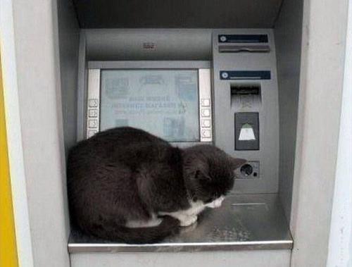 ヤバイ銀行のATMの画像(2枚目)