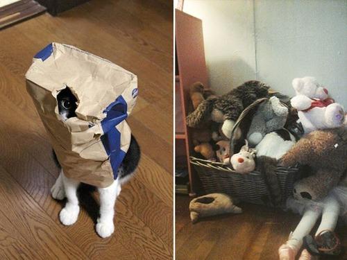 隠れているつもりの猫の画像(8枚目)