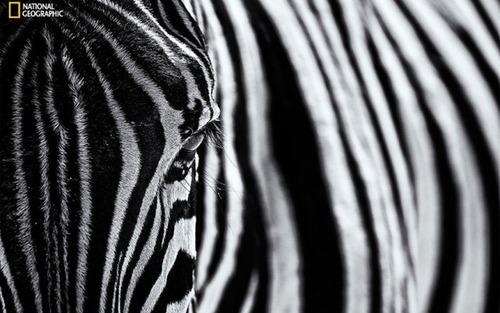 ナショナル ジオグラフィック!2015年で最も印象的だった写真の数々!の画像(22枚目)