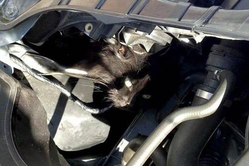 自動車の中に潜んでいる動物達の画像(12枚目)