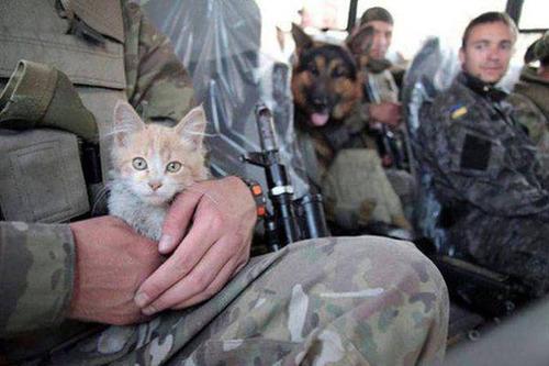 戦場にもネコは居る!!極限状態でも癒される戦場のネコの画像の数々!!の画像(6枚目)