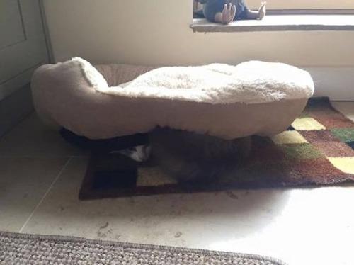 にゃんとも言えない、ちょっと困った猫の画像の数々!!の画像(2枚目)