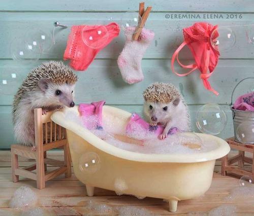 secret_world_of_hedgehogs_08