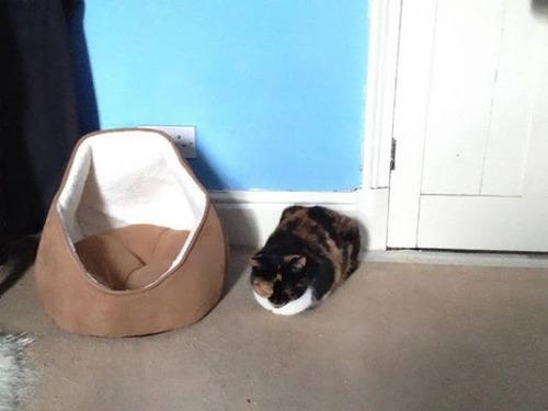 にゃんとも言えない、ちょっと困った猫の画像の数々!!の画像(12枚目)