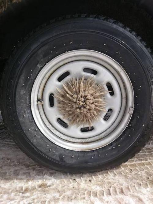 凍っている自動車の画像(41枚目)