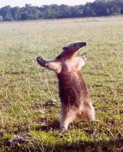二足歩行しているかわいい動物の画像(7枚目)