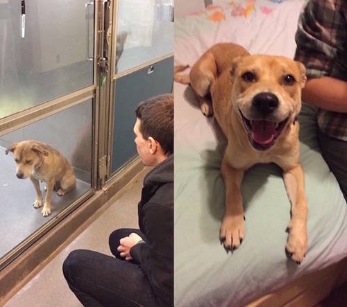 捨犬の時と良い飼主が見つかった時のワンちゃんのほのぼの比較画像の数々!!の画像(7枚目)