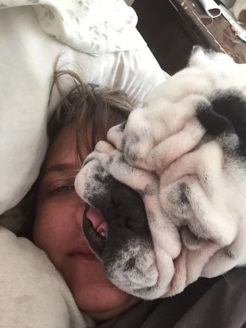 犬は可愛いけど、かなりジャマな感じの犬の画像の数々!!の画像(9枚目)