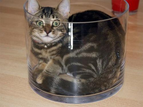 器に入った猫の画像(15枚目)