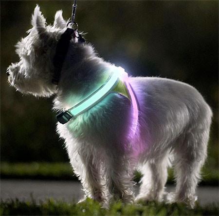 暗い夜でもよく光る!光る犬用のベストがカッコいい!!の画像(5枚目)