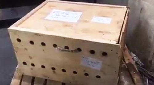 空港で見つかった荷物の中身の画像(1枚目)