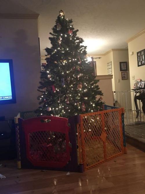 ペットと過ごすクリスマスの画像(33枚目)