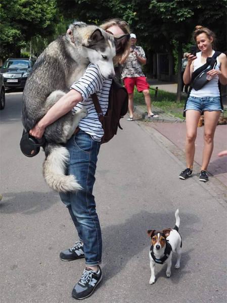 怯えてる犬の画像(3枚目)
