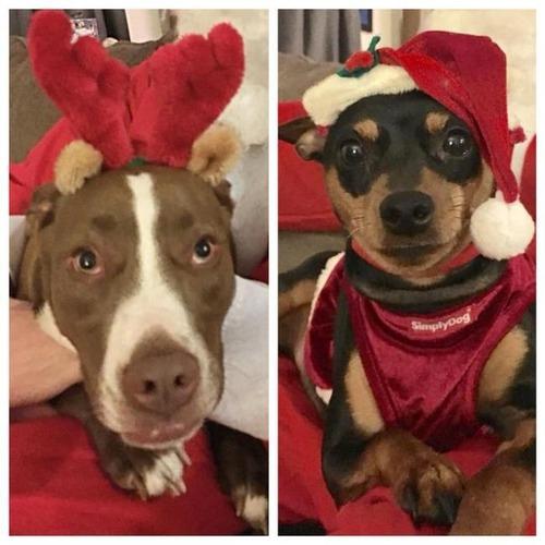 クリスマスのコスプレをした動物達の画像(6枚目)