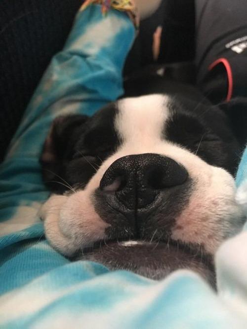 可愛く眠っている動物達の画像(20枚目)