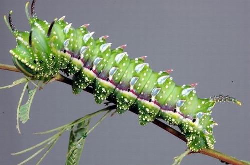 怪しすぎる見た目の昆虫の画像(21枚目)