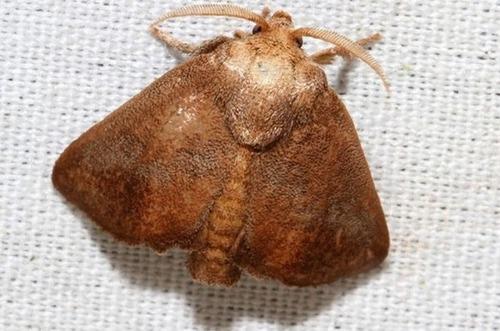 怪しすぎる見た目の昆虫の画像(32枚目)