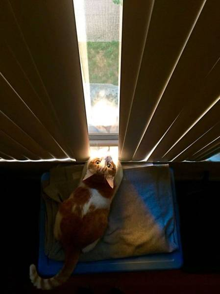神々しい猫の画像(8枚目)
