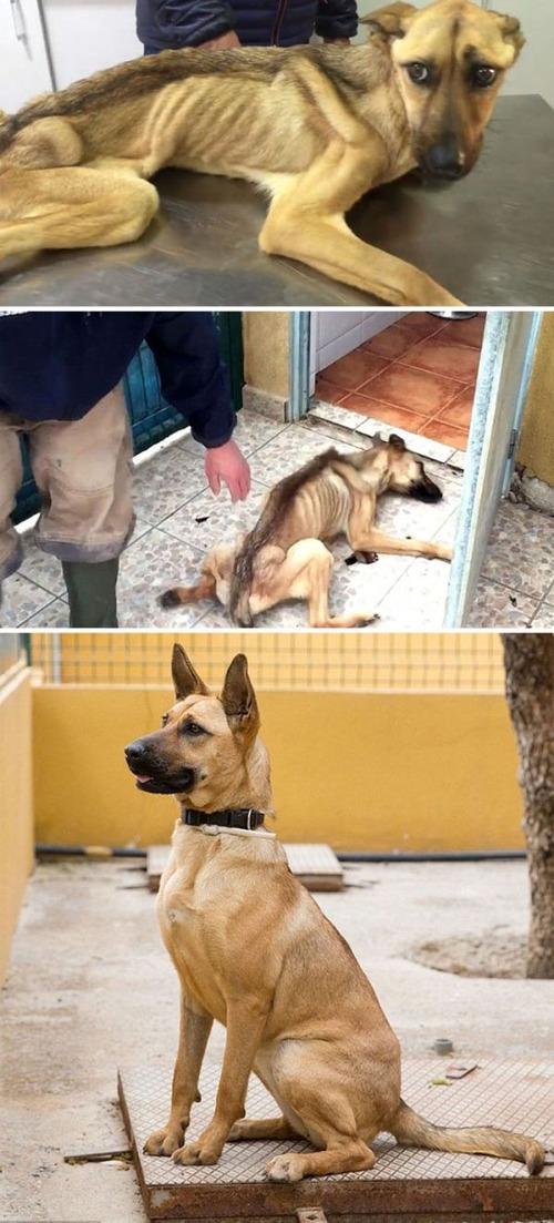 野良犬が保護された後の画像(10枚目)