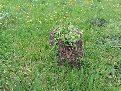 隠れているつもりの猫の画像(5枚目)