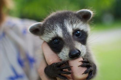 かわい過ぎる!癒される!動物の子供の画像の数々!!の画像(1枚目)