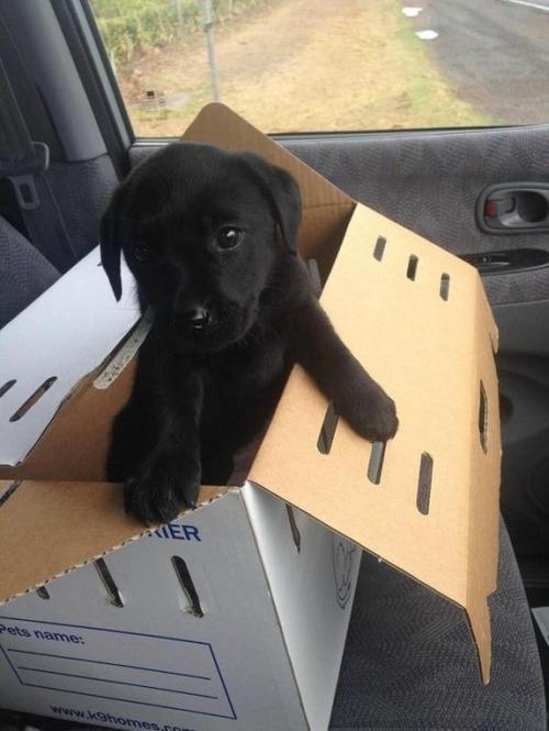 かわい過ぎる子犬の画像の数々!の画像(37枚目)