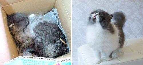 【画像】子汚い野良猫を拾って育てたら、こんなに可愛いニャンコになりましたよ!の画像(6枚目)
